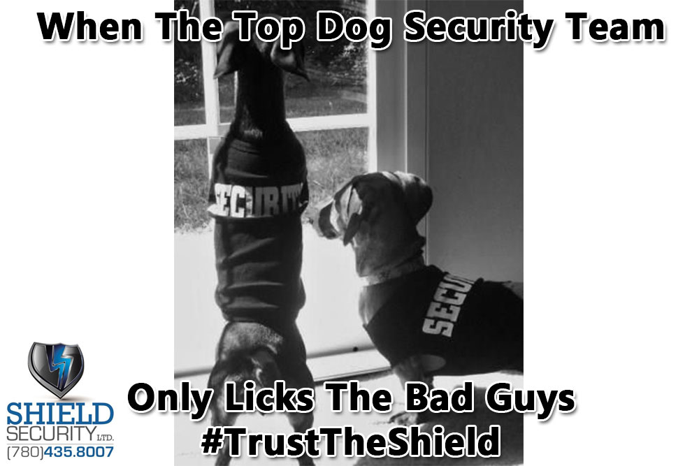 Shield-Security-top-dog-security